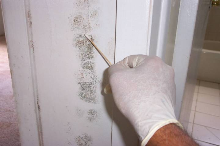 Mold Testing Rosie Home Inspections
